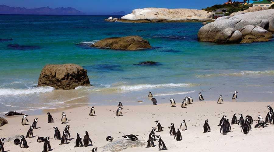 Sudáfrica Esencial